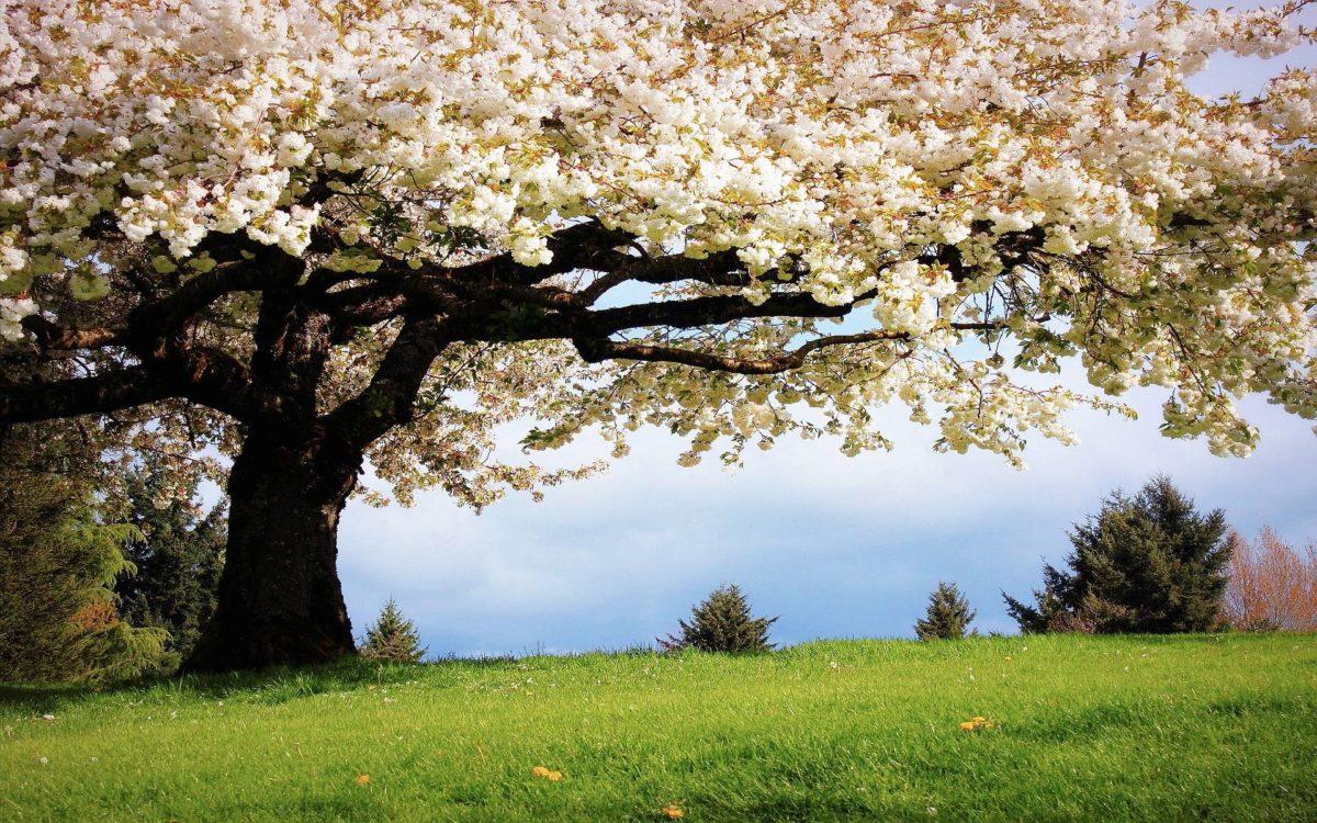 spring_wallpaper.jpg