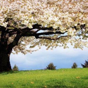 download spring_wallpaper.jpg