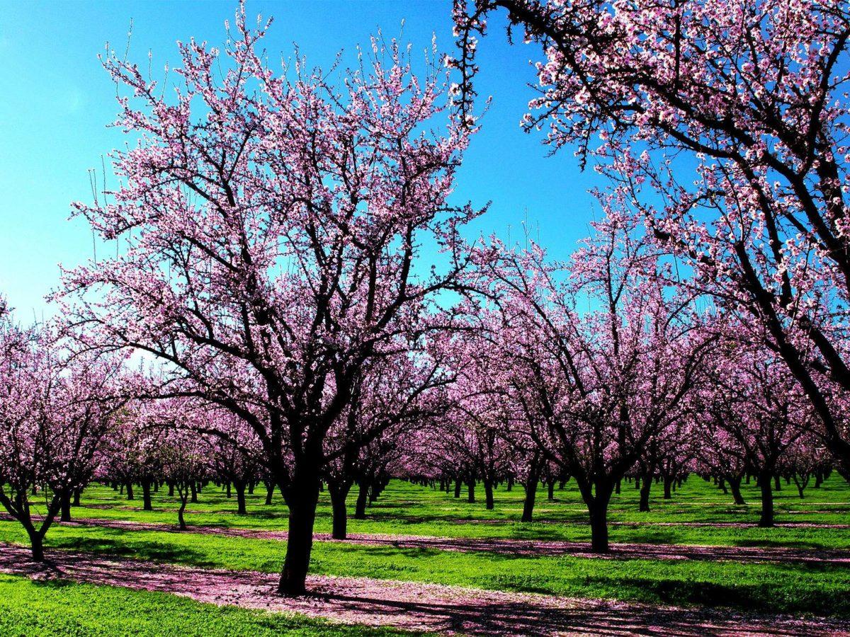 Desktop : Spring Wallpaper Spring Nature 1200x1600px Spring …