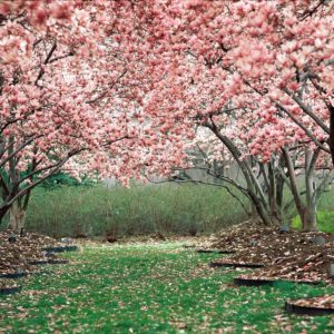 download Spring Backgrounds 18 best hd 21887 HD Wallpaper   Wallroro.