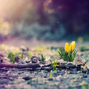 download Spring Photography Wallpaper HD #12343 Wallpaper   High Resolution …
