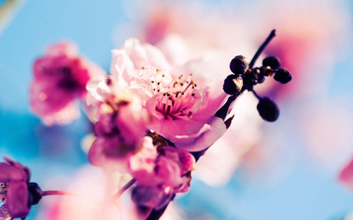 spring wallpaper | spring wallpaper – Part 4