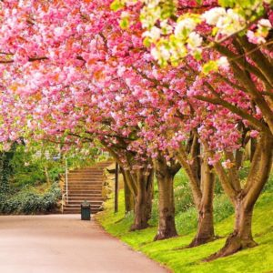 download Spring Wallpaper – Android Apps on Google Play
