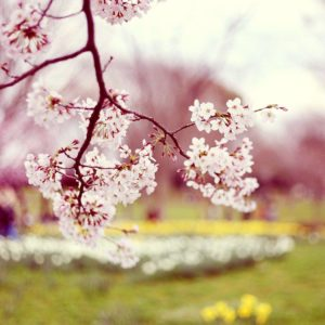 download Wallpaper's Collection: «Spring Wallpapers»