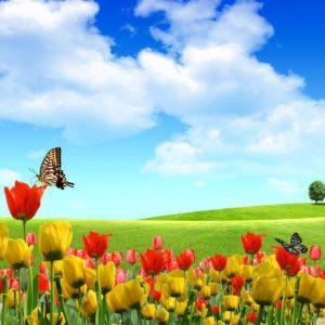 download Spring Desktop Wallpaper Collection (27+)