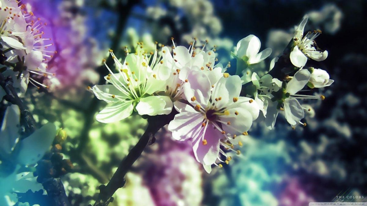 Colorful Spring HD desktop wallpaper : Widescreen : High …
