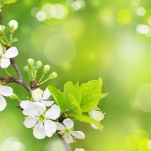 download Category: Spring Wallpaper | Download HD Wallpaper›› Page 0 …