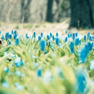 download Spring Wallpapers Download Group (87+)