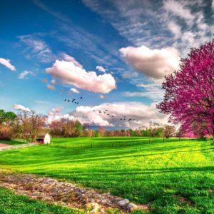 download beautiful-spring-scenery-wallpapers-hd-1080p-1920×1080-desktop-03.jpg