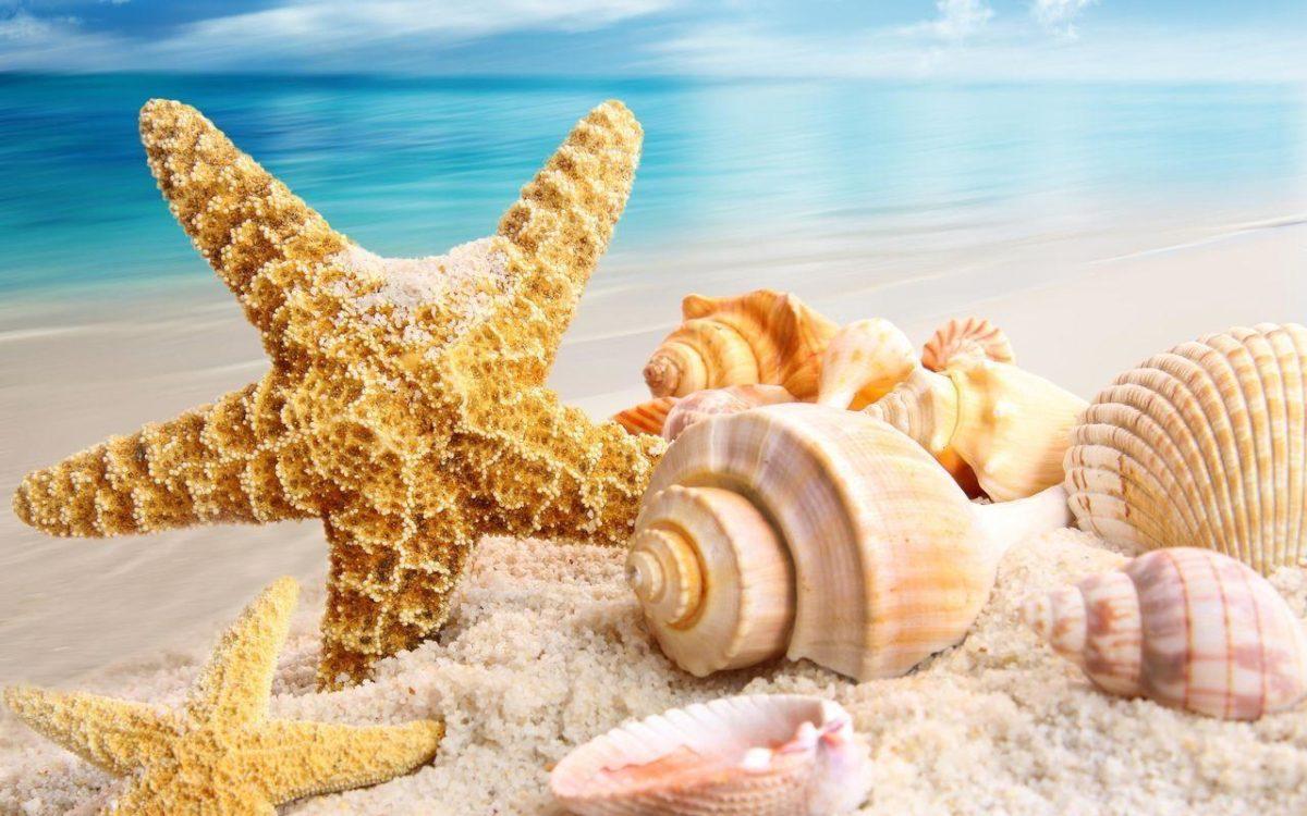 Beautiful Shells Summer Wallpapers, Summer Wallpapers | HD …
