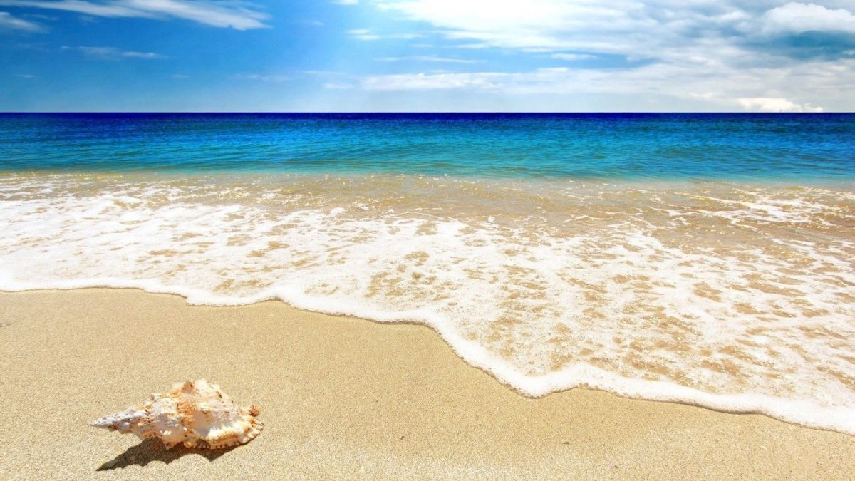 Scallop Tag wallpapers: Scallop Footprints Shell Blue Water Summer …