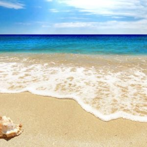 download Scallop Tag wallpapers: Scallop Footprints Shell Blue Water Summer …