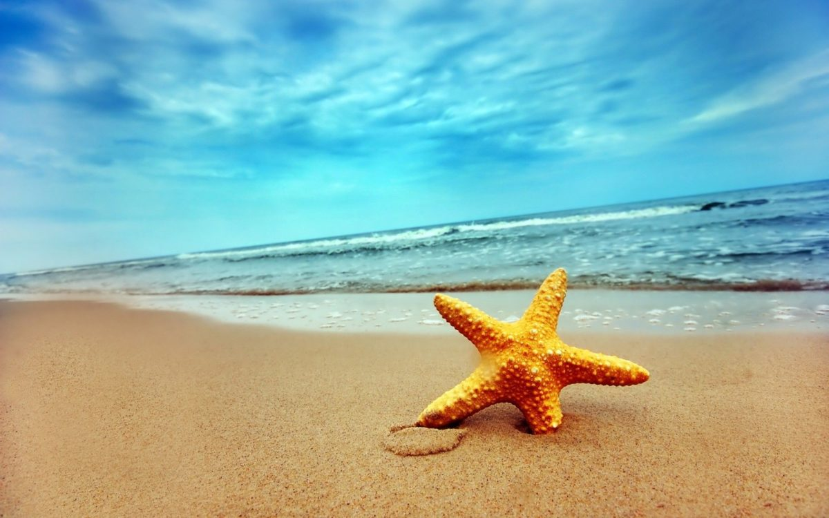 Starfish Wallpapers – 4USkY.com