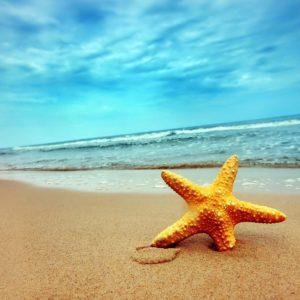 download Starfish Wallpapers – 4USkY.com