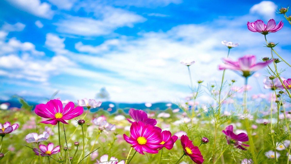 beautiful-flowers-summer-season-hd-wallpapers-free – HD Wallpaper