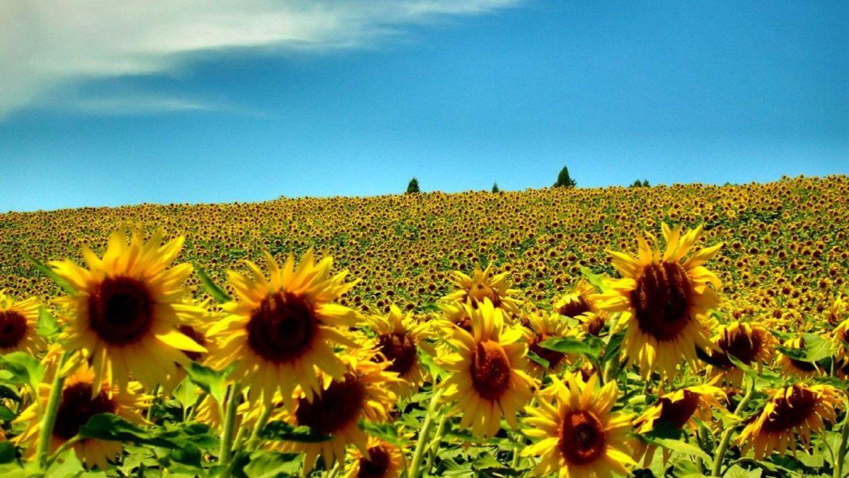 Summer | Free Download HD Desktop Wallpaper Backgrounds Images
