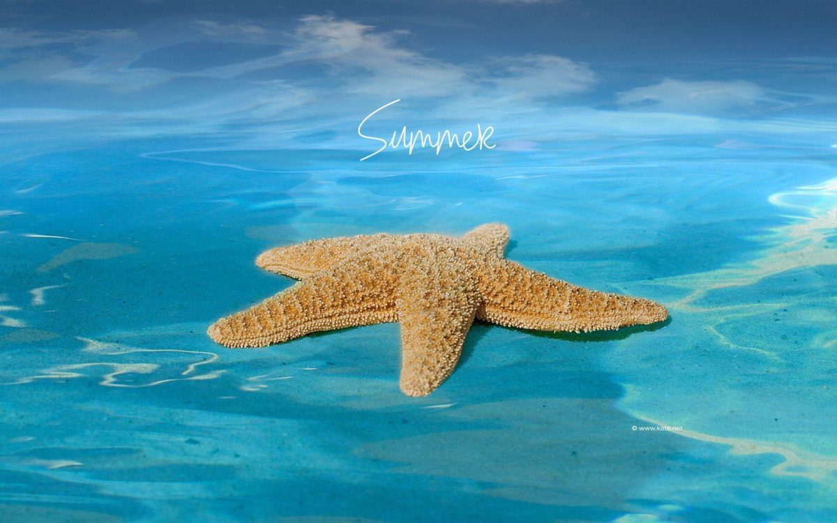Summer Wallpapers 2012 – Tera Wallpaper