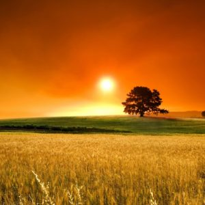 download Summer Sunset Wallpapers Hd Background 8 HD Wallpapers | Hdimges.