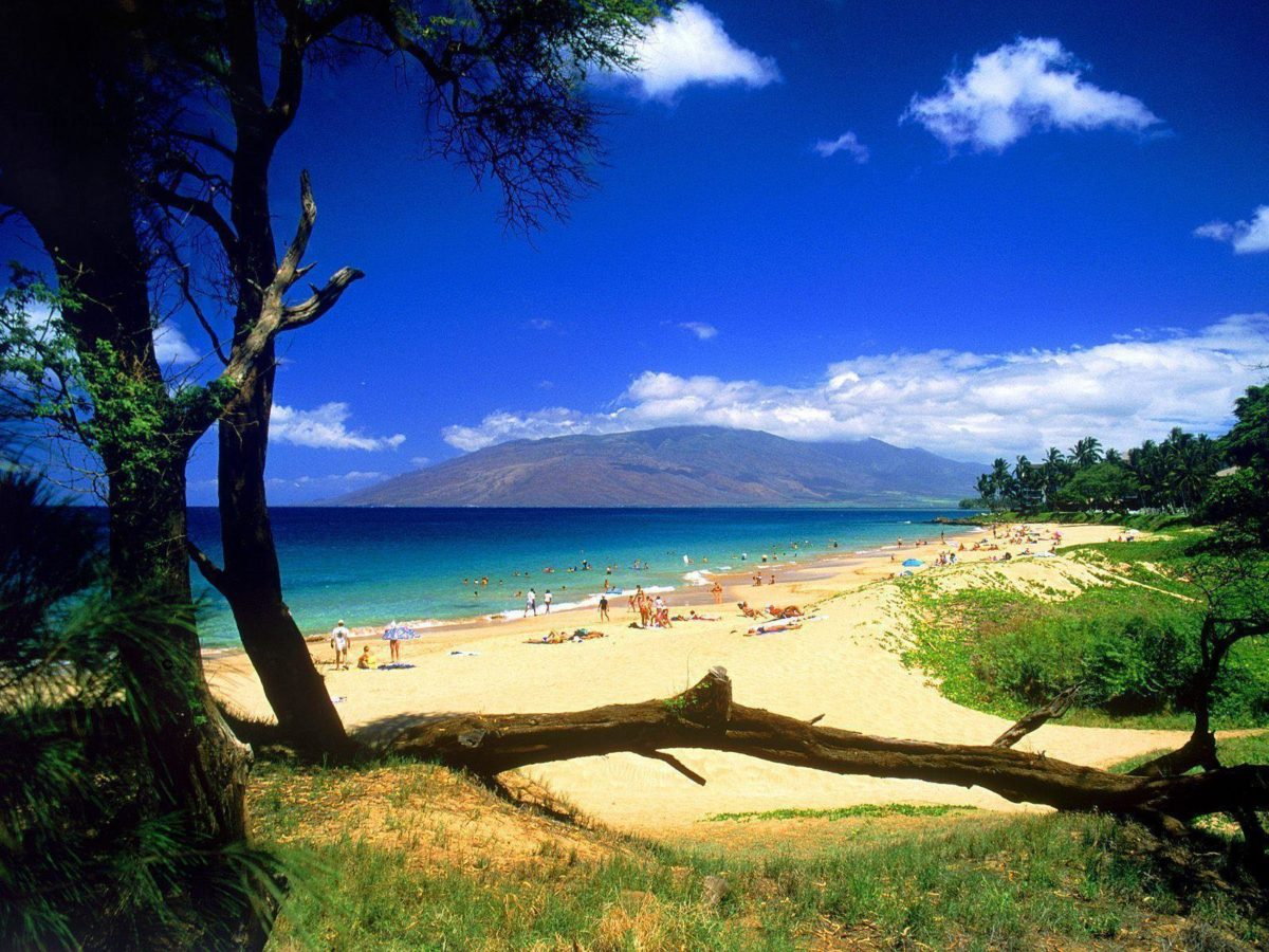 Summer Fun – Free Download Wallpaper Desktop, Widescreen and Mobile