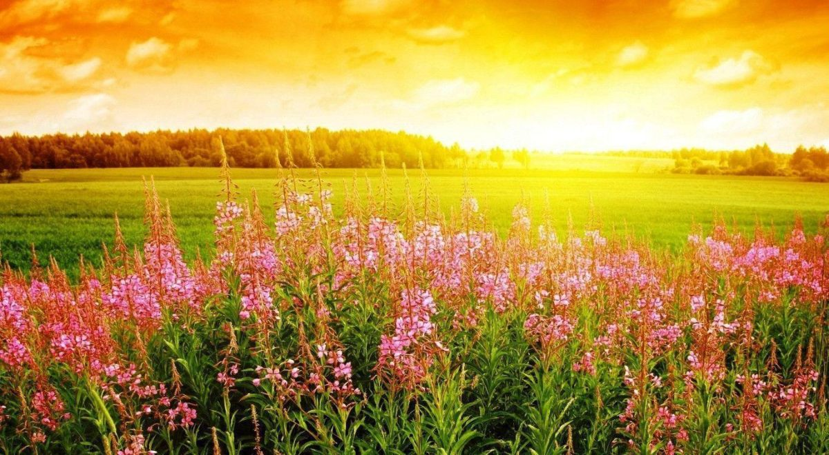 Sunrise Flower Wallpaper Photos HD 512891 #5090 Wallpaper | Cool …