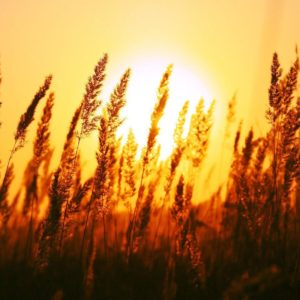 download Beautiful Sun Rise Wallpapers | HD Wallpapers