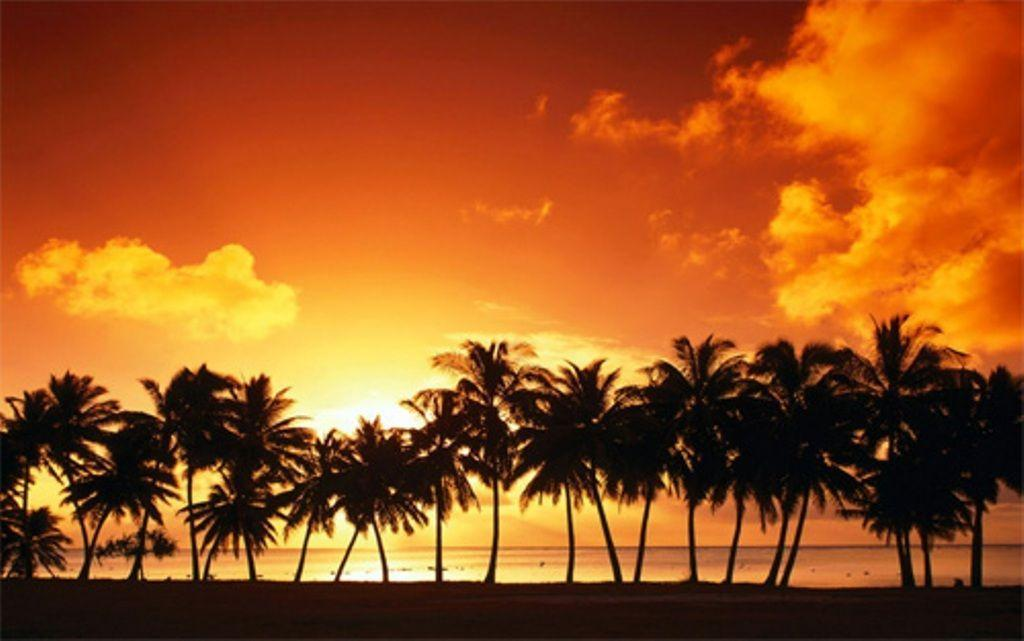 Palm Tree Sunset Background Desktop Background | Desktop …