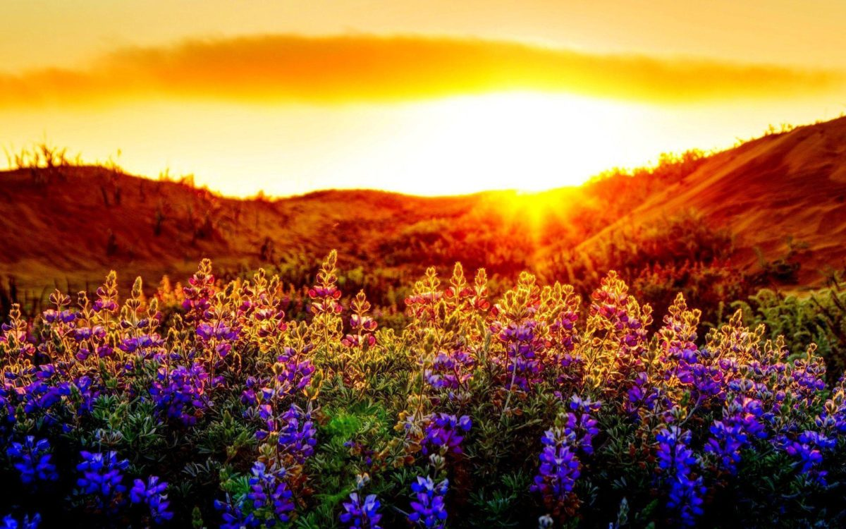 FunMozar – Sunset