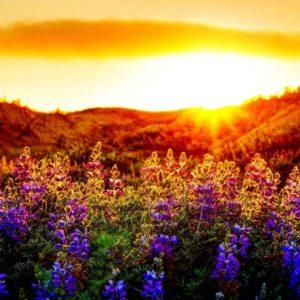 download FunMozar – Sunset