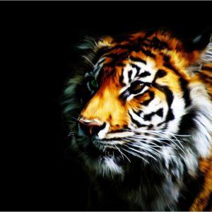 download Tiger Wallpaper by Rubenski87 on DeviantArt