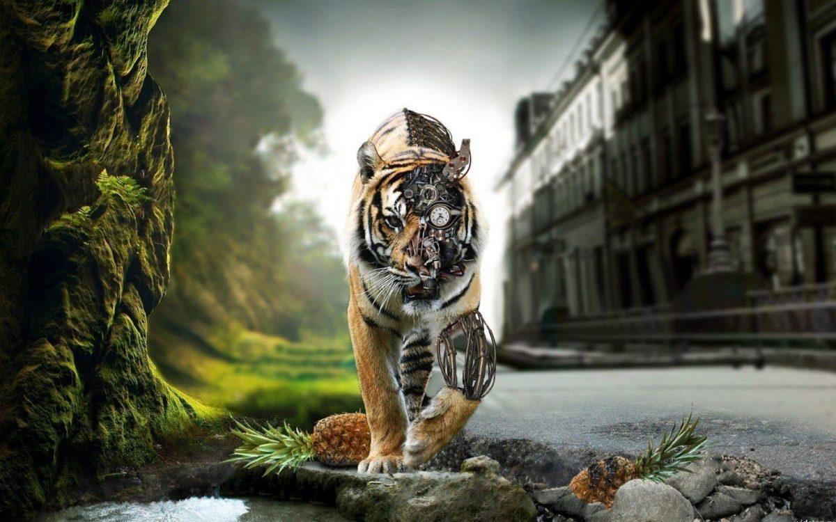 1 Tiger Wallpaper Tigers 1024×768 – High Definition Wallpaper …