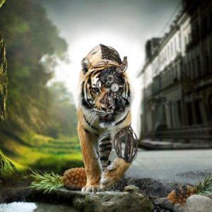 download 1 Tiger Wallpaper Tigers 1024×768 – High Definition Wallpaper …