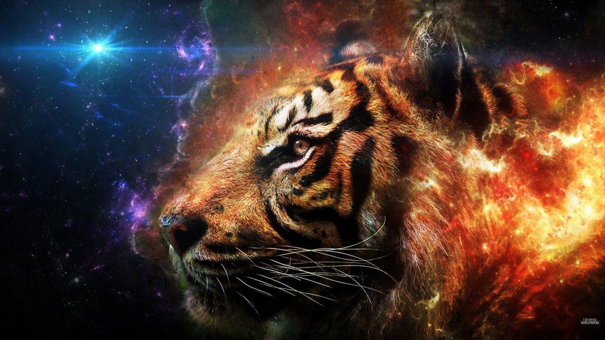 Free Wallpapers – Tiger Head 2560×1440 wallpaper