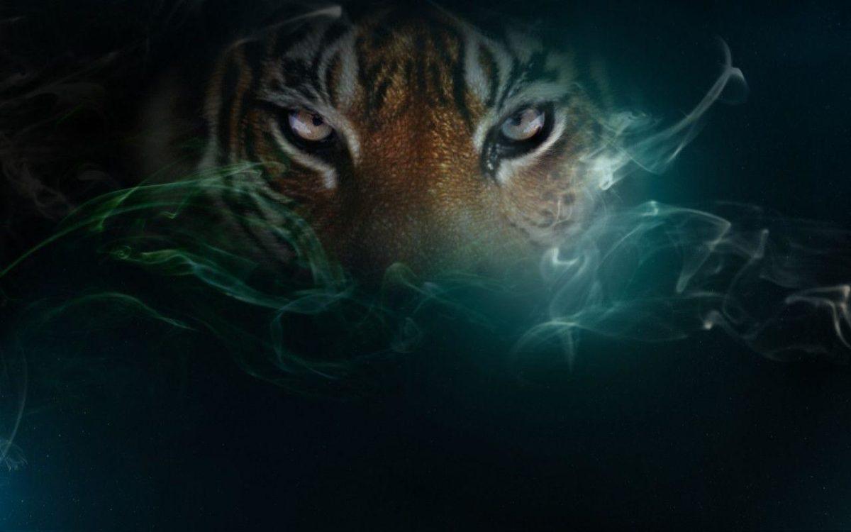 Tiger ♥ ~ – Tigers Wallpaper (10309377) – Fanpop