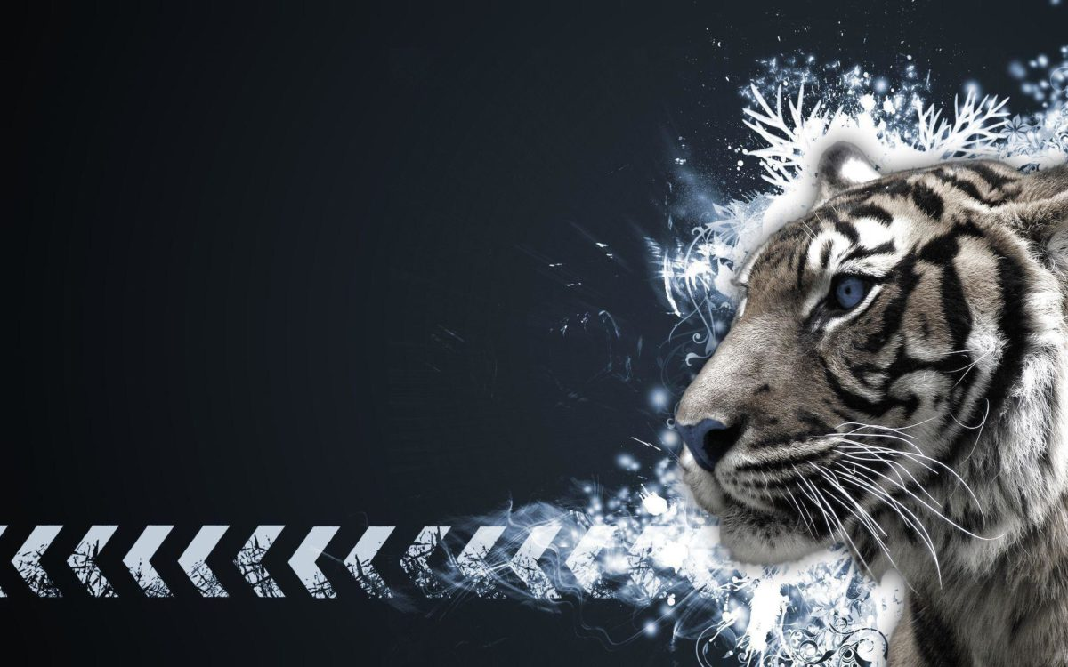 Tiger White Wallpapers – Full HD wallpaper search – page 3