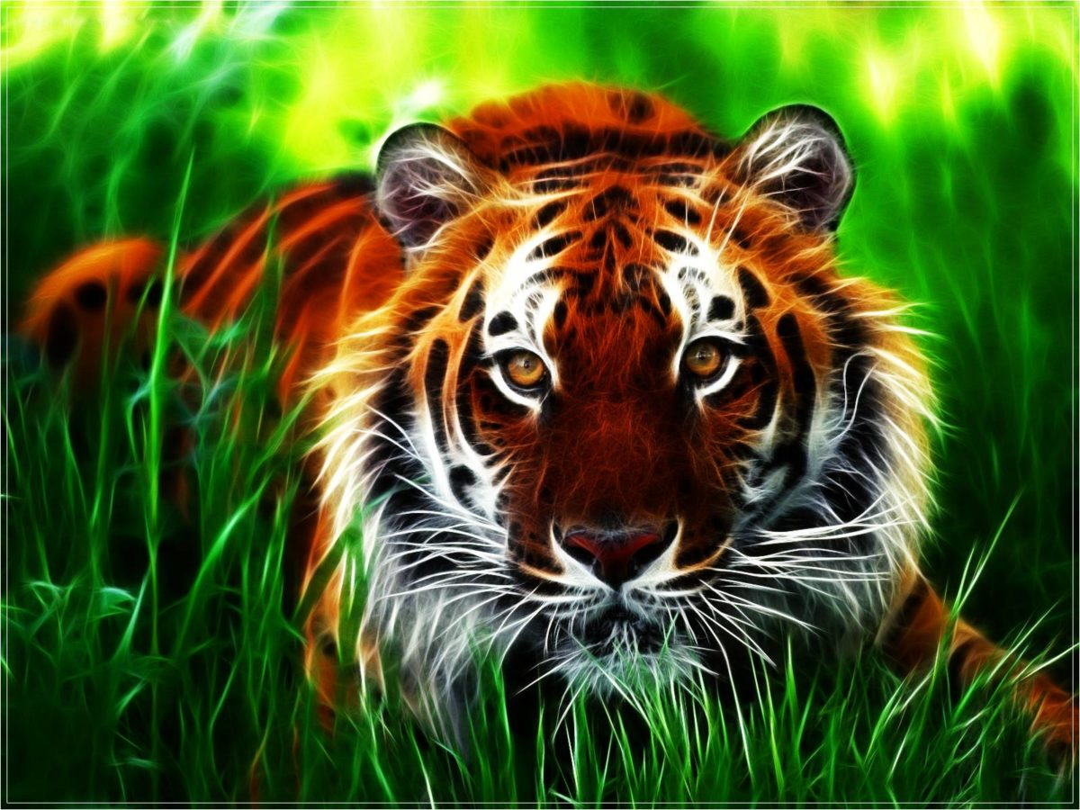 A selection of 10 Images of Tigers in HD quality
