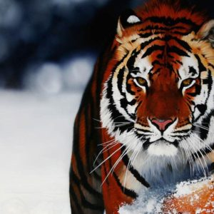 download A selection of 10 Images of Tigers in HD quality