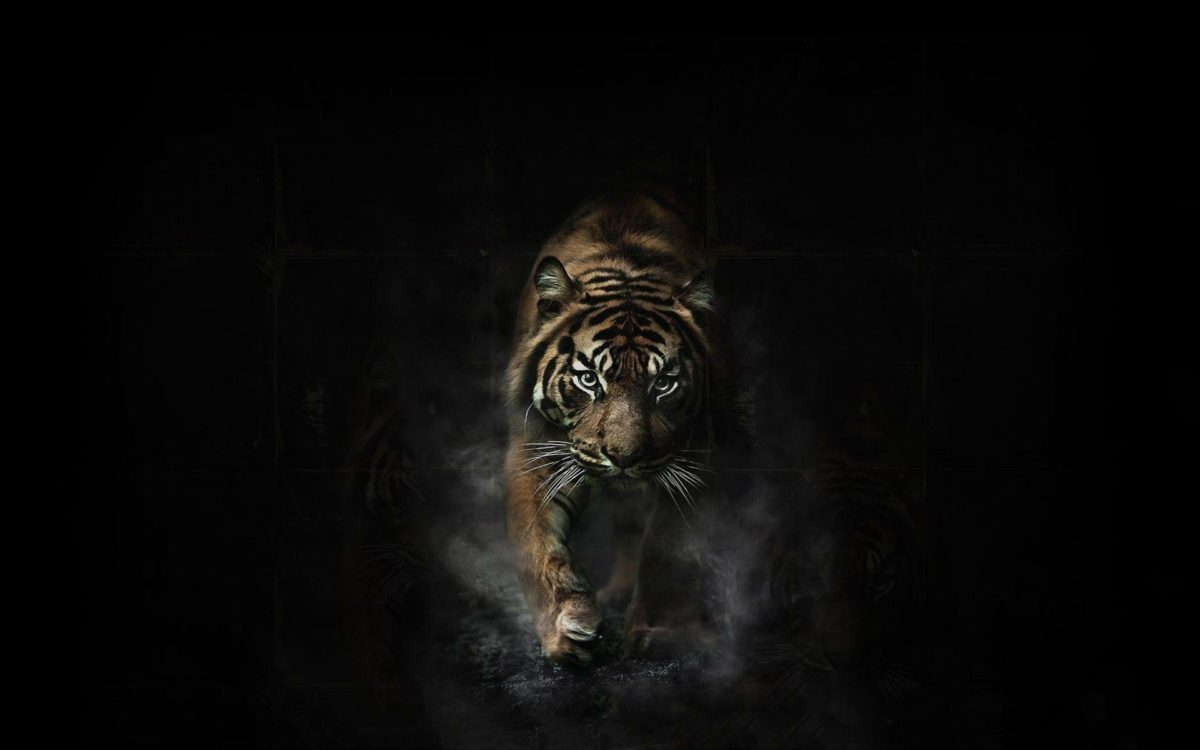 Angry Tiger Wallpapers – Full HD wallpaper search