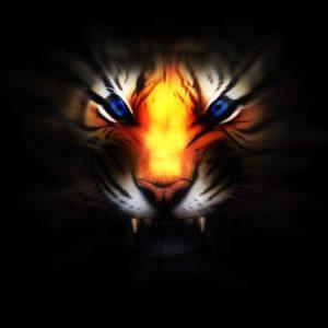 download 235 Tiger Wallpapers | Tiger Backgrounds