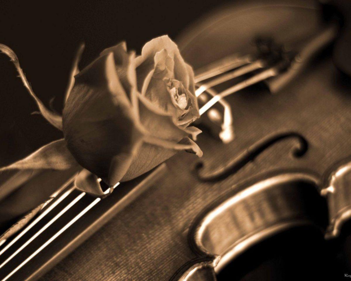 Rose and Violin Wallpaper – Music Wallpaper (28520430) – Fanpop