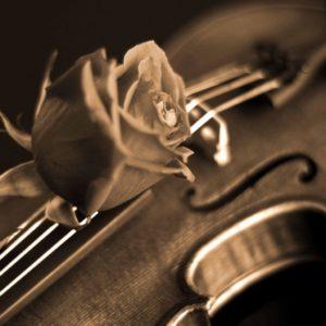 download Rose and Violin Wallpaper – Music Wallpaper (28520430) – Fanpop