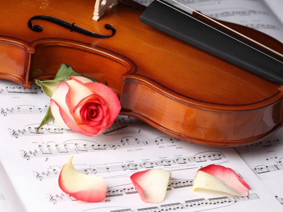 Rose Flower And Violin Wallpaper Free Download #6442 Wallpaper …