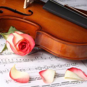download Rose Flower And Violin Wallpaper Free Download #6442 Wallpaper …