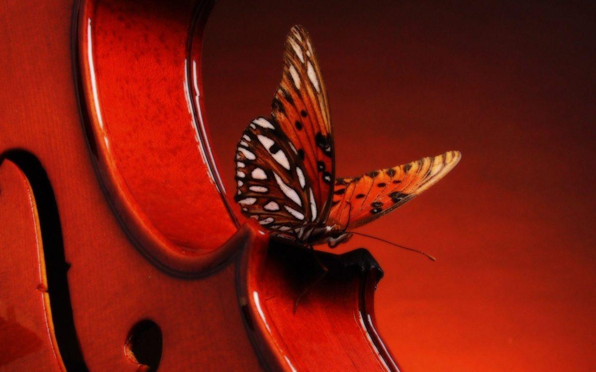 Hd Wallpapers Violin 2560 X 1600 2369 Kb Jpeg | HD Wallpapers …