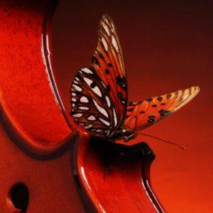 download Hd Wallpapers Violin 2560 X 1600 2369 Kb Jpeg | HD Wallpapers …