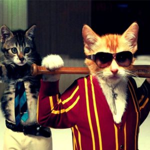 download Funny Cat | Download HD Wallpapers