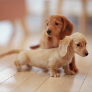 download Wallpaper Of Puppies