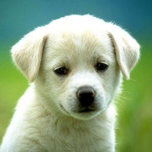 download puppy wallpaper – dancing little animals Wallpaper (28654684) – Fanpop