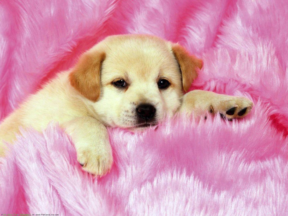 Cute Puppies Wallpapers – HD Wallpapers Inn