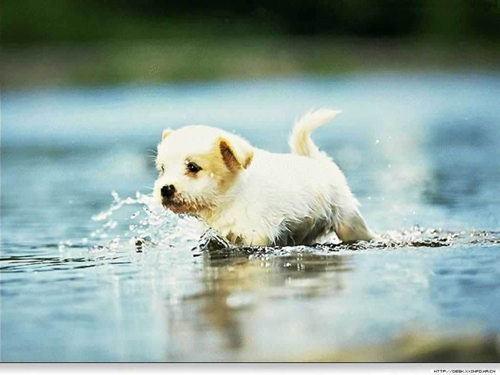 Cute Puppies HD Wallpaper High Quality – Best Wallpapers | Best …