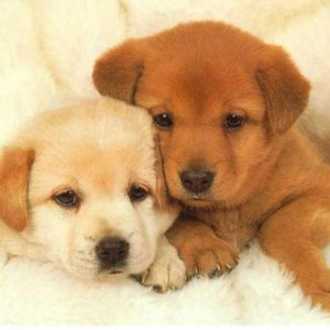 download Puppies Wallpaper – Animal Backgrounds